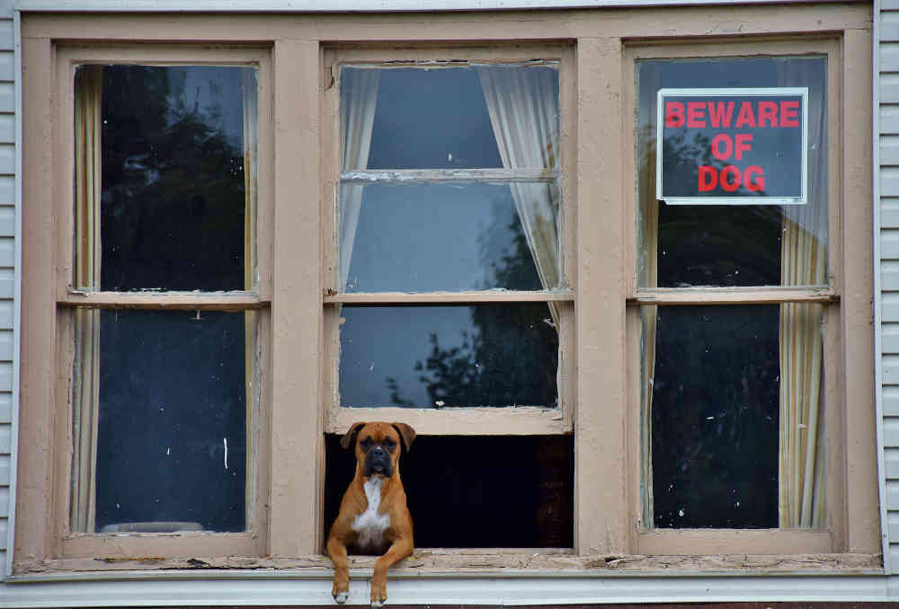 pet sitter - beware of dog