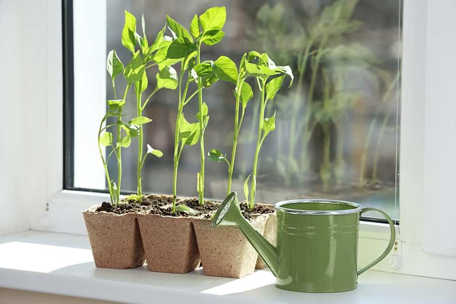 improve your gardening skills