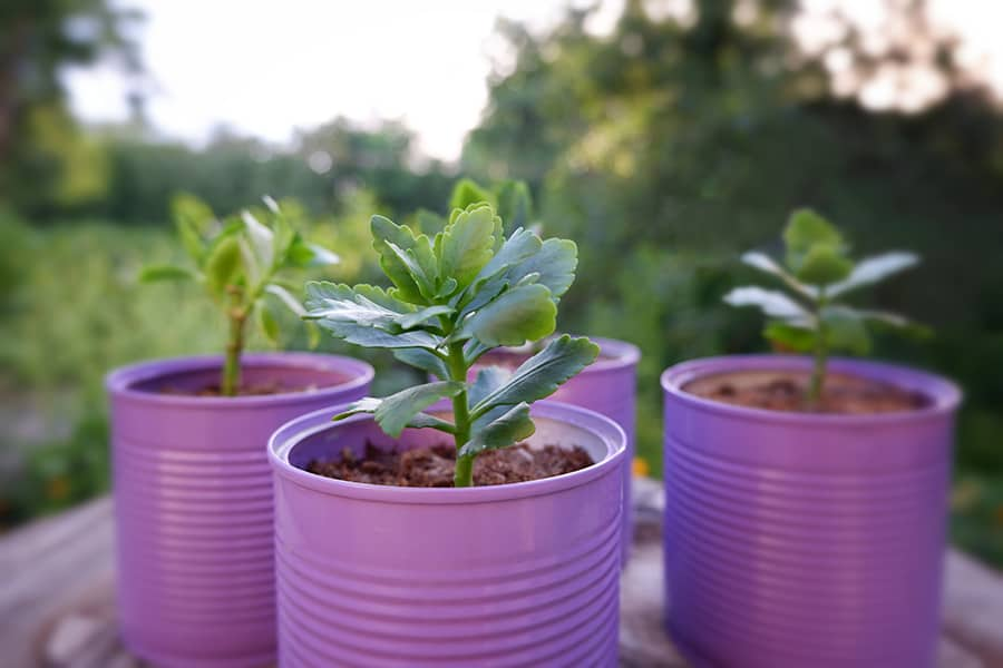 turn tin cans into pretty pots