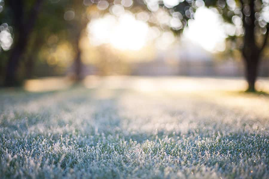 protect tender plants from late frosts in May